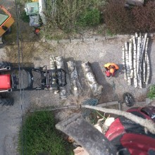 Trefelling med traktor og flishugger