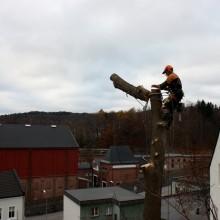Trefelling, Larvik