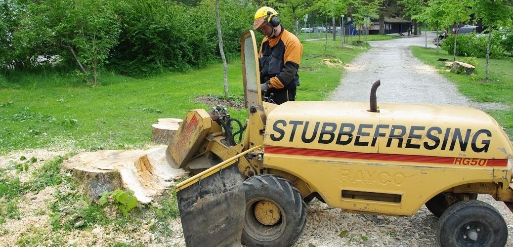 En stubbefreser freser vekk en stor stor stubbe. Stubben bil frest til flis, og det er straks klart til å planeres og plantes. Stubbefresing, Langesund, Porsgrunn og Skien